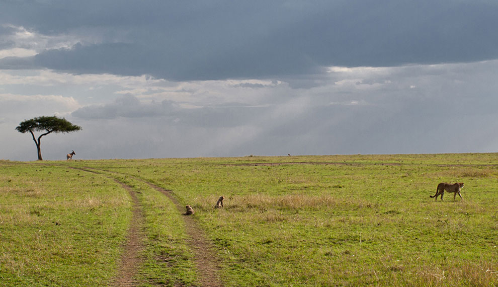 About the Serengeti Plains Formation